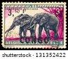 BELGIAN CONGO - CIRCA 1959: A stamp printed in Belgian Congo, shows African elephant, circa 1959 - stock photo