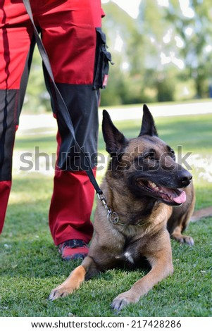 Belgian Shepherd is located at the foot