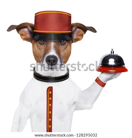 bellboy dog holding a bell with red hat - stock photo