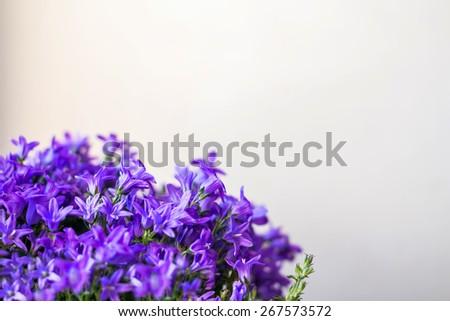 Bellflower background with selective focus