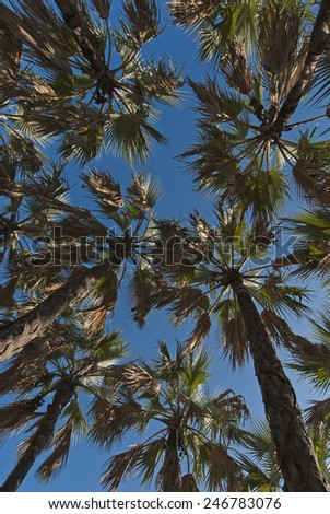 Below a tropical palm forest ..Wide angle perspective - stock photo