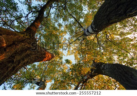 Below tree in forest at fall - stock photo