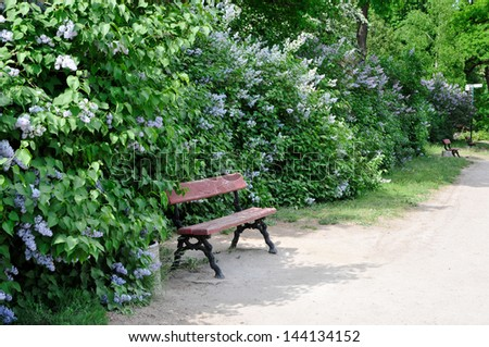 Bench in a park near the blossoming lilac bushes. - stock photo