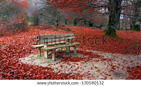 Bench in autumn with red leaves - stock photo