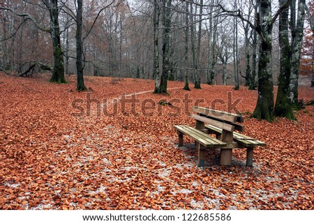 Bench in autumn with red leaves on the ground - stock photo