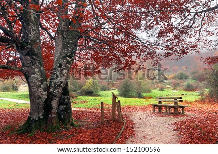 bench in park on autumn - stock photo