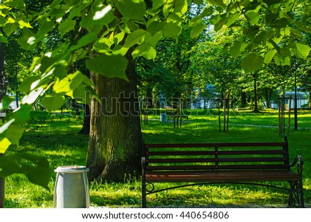 bench in summer park with tree in frame of leafs. nature background - stock photo