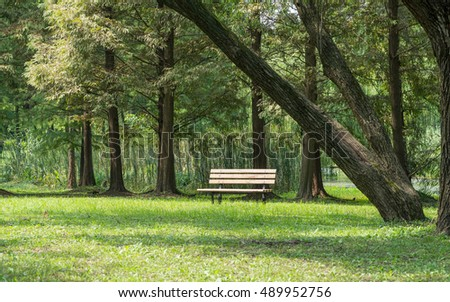 Bench in the summer park with old trees and footpath