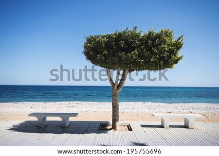 Bench under tree on sunny beach in Altea, Spain - stock photo