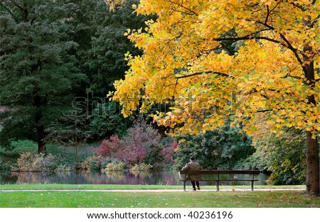 Bench under yellow tree and single man - stock photo