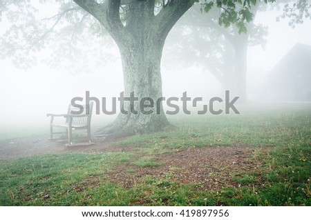 Benche and tree in fog, behind Dickey Ridge Visitor Center in Shenandoah National Park, Virginia. - stock photo