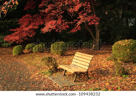 Benches and autumn colors