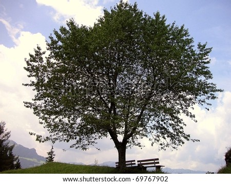 Benches under the tree - stock photo