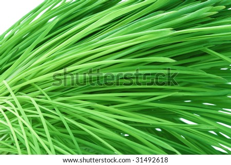 Bended green grass abstract background. Macro of cereal green blades. Diagonal view. Isolated on white - stock photo