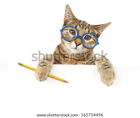 Bengal cat looking over a sign - stock photo