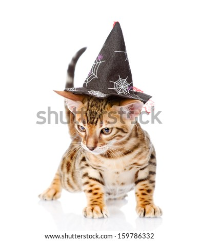 Bengal cat with witch hat. isolated on white background - stock photo
