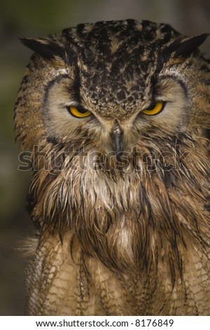 Bengal Eagle Owl (Bubo Bubo Bengalensis) - portrait orientation - stock photo