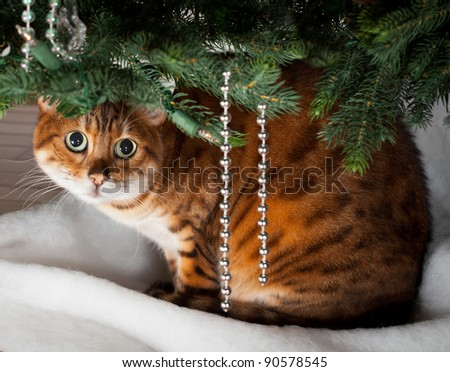 Bengal kitten sleeping under an xmas tree - stock photo