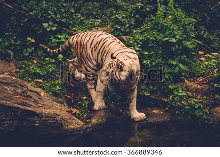 Bengal tiger playing deep in a jungle - stock photo