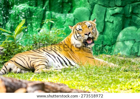 bengal tiger resting on the green grass - stock photo