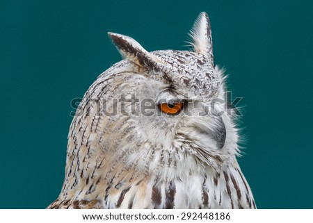 Bengali owl. Bubo bengalensis. - stock photo