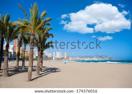 Benidorm Alicante beach palm trees and Mediterranean sea of Spain - stock photo