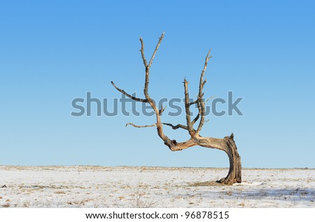 Bent Dead Tree in Snowy Farm Field - stock photo
