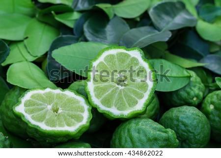 bergamot on hand  - stock photo