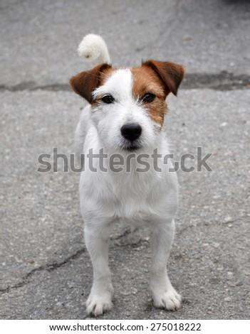 best friend - stock photo