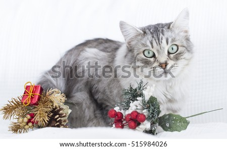 Best wishes with a beauty cat