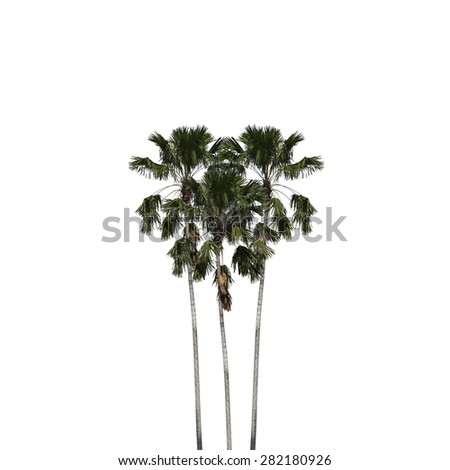 Betel palm heart shape isolated on white background, clipping path included. - stock photo