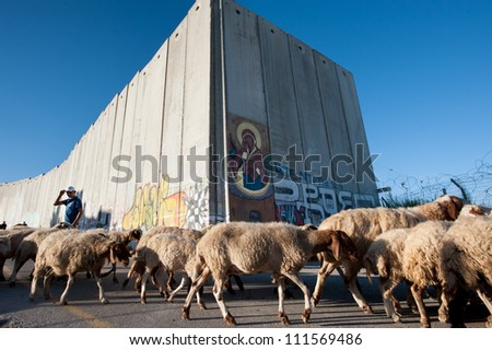 BETHLEHEM, OCCUPIED PALESTINIAN TERRITORIES - AUGUST 24: A Palestinian shepherd tends his flocks near the Israeli separation wall close to the Bethlehem checkpoint, West Bank, August 24, 2012. - stock photo