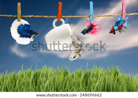 Betta and Hamster hanging on the clothesline, landscape background  - stock photo
