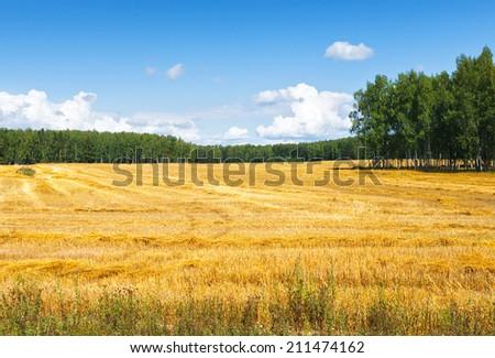 Beveled Farm Field  full of hay bales - stock photo