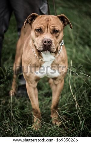 Beware of dog - stock photo