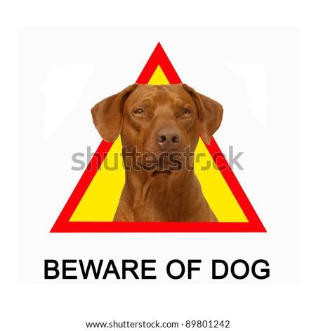 Beware of dog sign, Rhodesian Ridgeback dog portrait. - stock photo