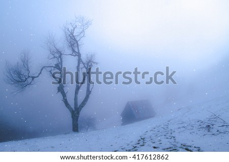 Beyond the mist, mysterious dream scape snow fall day on the mountains and lone dry tree - Cindrel mountains, Paltinis resort area, Sibiu County, Romania, 600m. - stock photo
