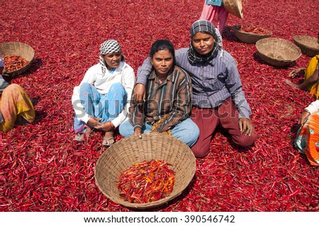 BHIWAPUR, NAGPUR, MAHARASHTRA, INDIA - MARCH 19 : Unidentified women worker spreading Red  chillies to dry in Sunlight at Bhiwapur, Bhiwapur is famous for red Red chillies.  19 March 2014.