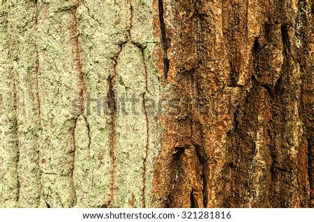 Bi-colored pine-bark, one side with greenish bark lichens - stock photo