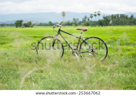 bicycle on the grass and rice field - stock photo