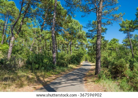 Bicycle road in Pine Forest. France - stock photo