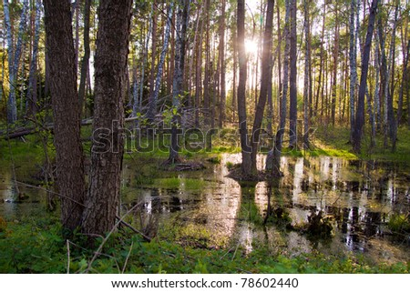 Biebrza swamps during the early sunset - stock photo