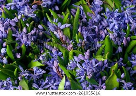 bifolia background of flowers - stock photo