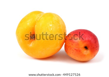 Big and little apricots