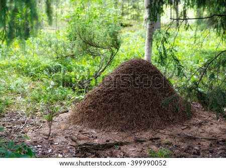 Big anthill in the woods. Big anthill with colony of ants in summer forest  - stock photo