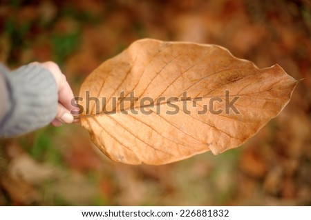 Big autumn magnolia leaf in a hand. Photo taken outdoors, shallow DOF. - stock photo