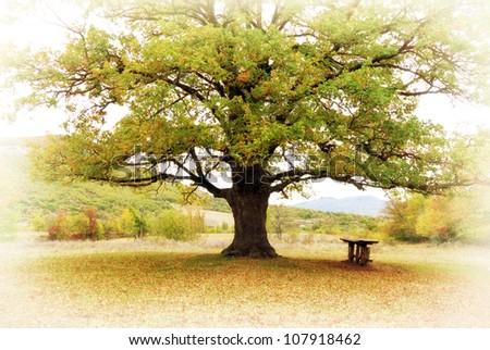 Big autumn tree. Nature composition. - stock photo
