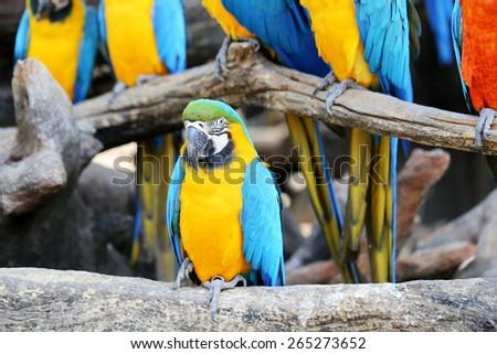 Big beautiful a macaws photographed close up - stock photo