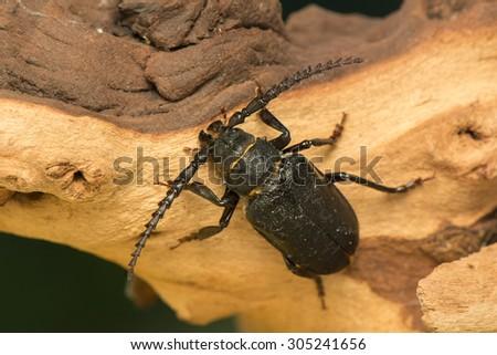 Big beetle - stock photo