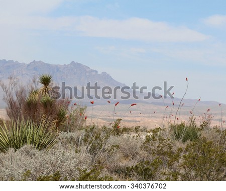 Big Bend with Ocotillo - stock photo